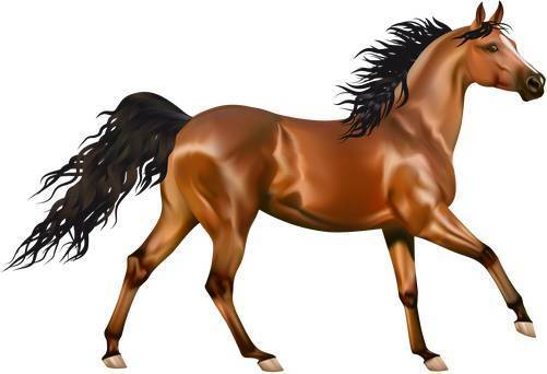 horse-buy-sell-puzzle