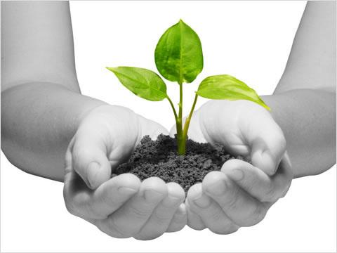 plant_tree_puzzle