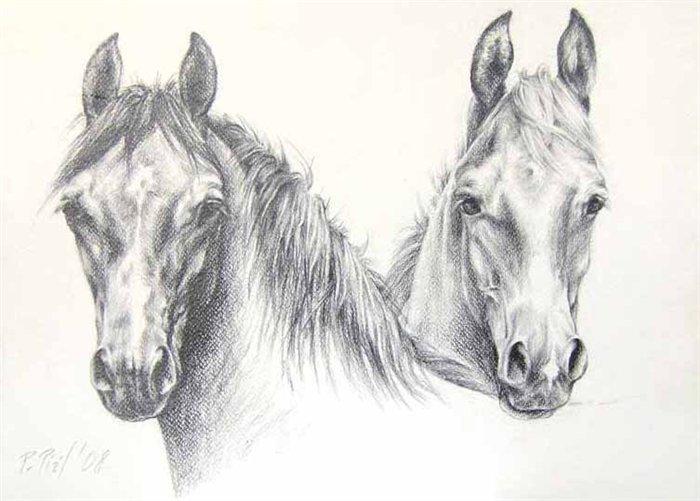 horses age puzzle