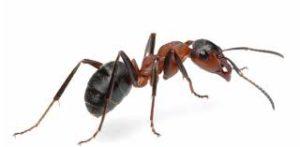 ant stupid puzzle