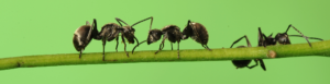 ants-on-stick-puzzle